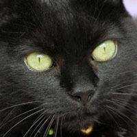 Satan_cat_blog