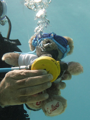 Gulliver_bear_scuba_diving